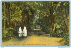 allee-des-bambou