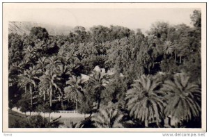 172228-algerie-el-golea-jardins-de-l-annexe-demeure-du