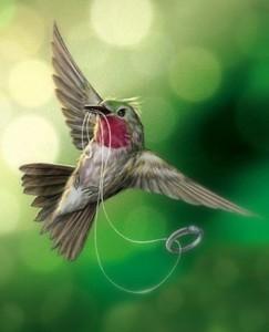 hummingbir_jf251krd